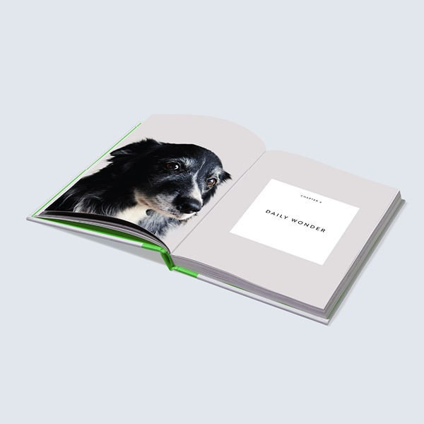 four legged therapy book preview collie